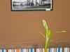 La planta y cuadro...